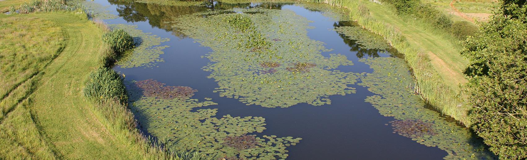copse meadow fishing lake - newdigate farms estate
